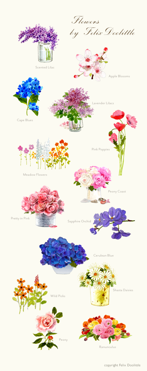 Flower illustrations by Felix Doolittle