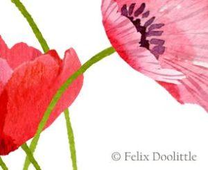 Pink Poppies by Felix Doolittle