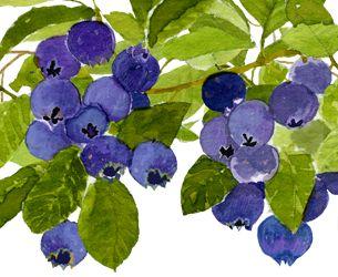 blueberrycluster